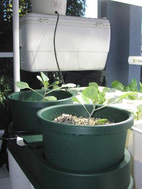 autopot system set up on porch