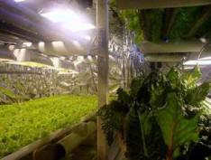 large basement garden