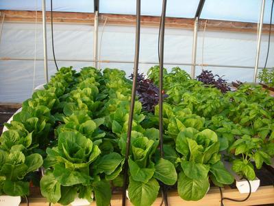 2012 hydroponics