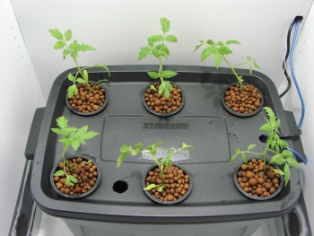 hydroponics bubbler unit with baby plants