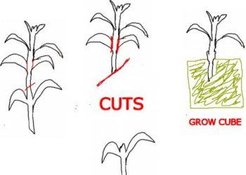 cloning plants. Black Bedroom Furniture Sets. Home Design Ideas