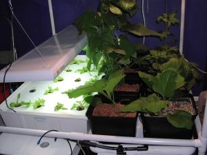 split-plan hydroponics garden