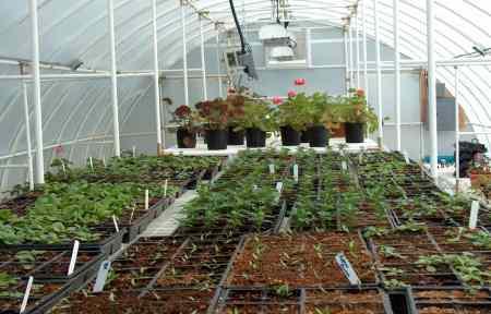 Solexx Conservatory greenhouses