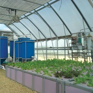 Commercial hydroponics- Should you go pro?