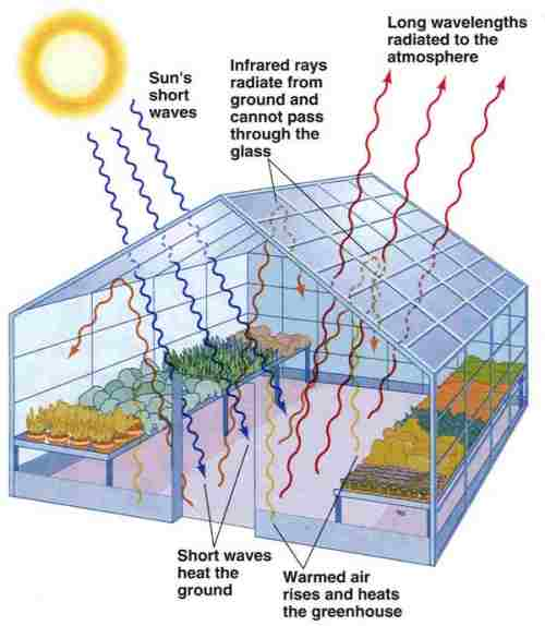 The Effect Light Intensity Has on the Photosynthesis of Spinach Chloroplasts