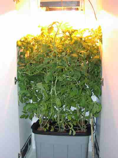 plants thrive in a grow box