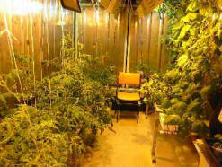 peaceful grow room