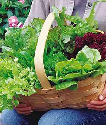 heat wave lettuce blend