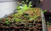 easy kitchen herb garden