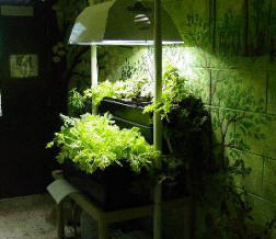 HID lamp necessary for hydroponics