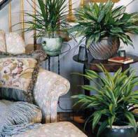 houseplants are easy
