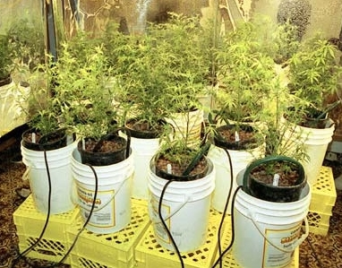 Hydroponic Weed Things To Consider