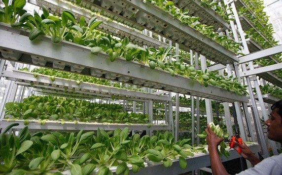 Commercial Hydroponics Should You Go Pro