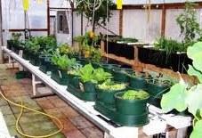 large auto pots garden