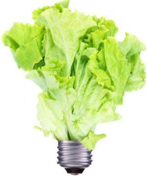 lettuce lightbulb