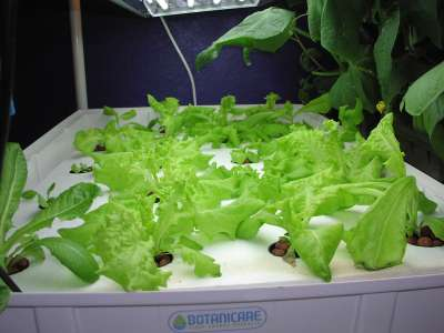 beautiful lettuce raft