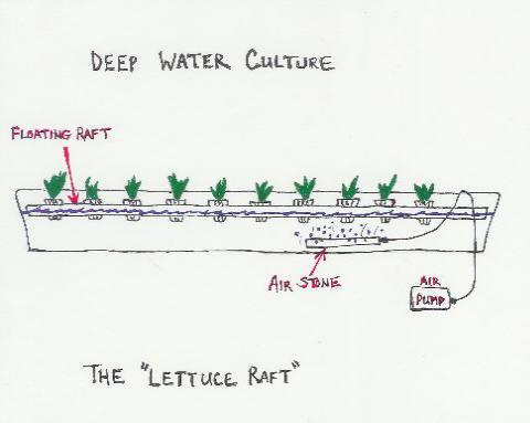 free lettuce raft plans