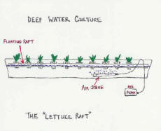 Free plans for hydroponic setups lettuce raft diagram ccuart Image collections