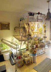 plants take over bedroom