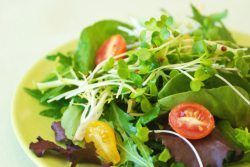 salad with microgreens