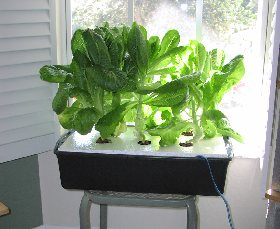 a small raft lettuce project