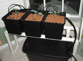 top drip bato bucket mini farm