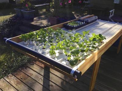 My Lettuce Table