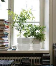 hydroponic office plants