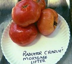 mortgage lifter heirloom tomatoes