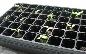 seedling flat for hydroponics