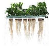 soil-less hydroponics