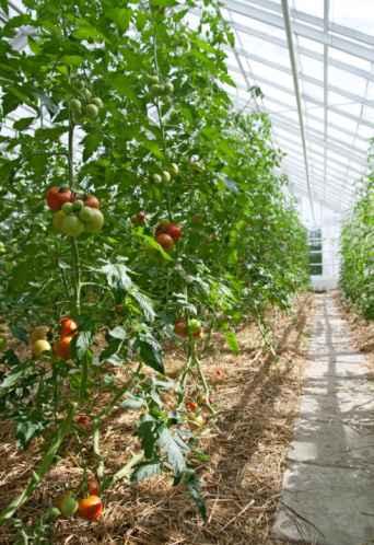 bright sunny greenhouse