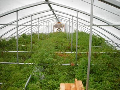 rafter Tomatoes