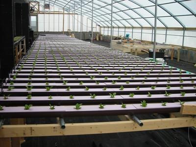 NFT 84 gutter 1260 plant system