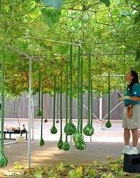 Epcot hydroponics exhibit