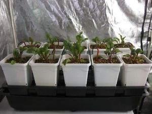 VersaGrow hydroponic system